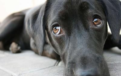 """Lý giải 5 hành vi """"kỳ cục"""" của chó giúp bạn hiểu chúng gần gũi với con người như thế nào"""