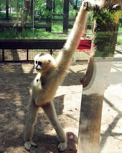 11 kiểu tạo dáng chụp ảnh tự sướng của các loài động vật