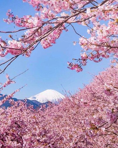 Có một nước Nhật đẹp như photoshop vào mùa hoa anh đào nở