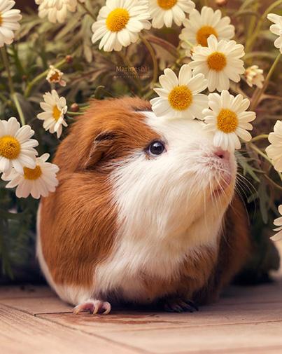 Chú chuột lang đáng yêu dù sắp chết nhưng vẫn thật rạng rỡ