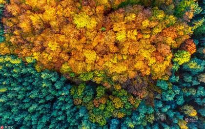 Những bức ảnh thiên nhiên tuyệt đẹp sẽ khiến bạn cảm thấy yêu mùa thu hơn bao giờ hết