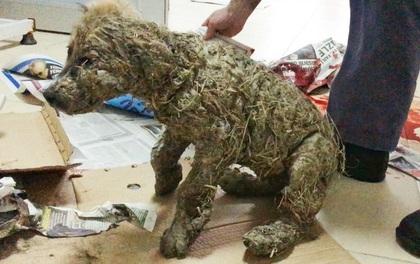 Phẫn nộ cảnh chú chó con bị đổ đầy keo và bùn lên người để làm trò giải trí cho lũ trẻ
