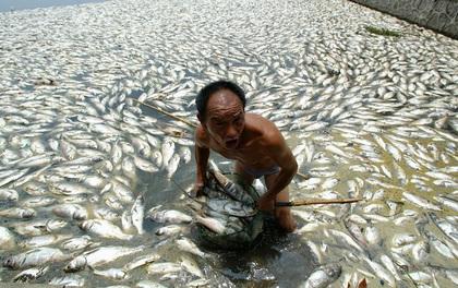 Rùng mình trước hình ảnh những dòng sông đầy rác thải và xác cá chết