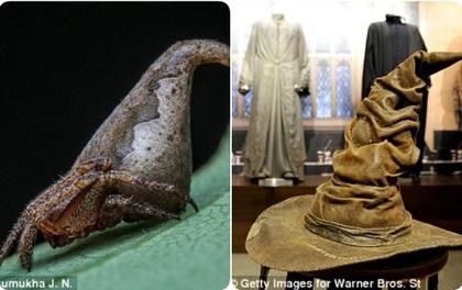 Tìm ra loài nhện Harry Potter đến cả J.K. Rowling cũng cảm thấy rất giống