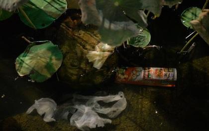 Cấm ăn uống ở phố đi bộ Nguyễn Huệ: còn băn khoăn