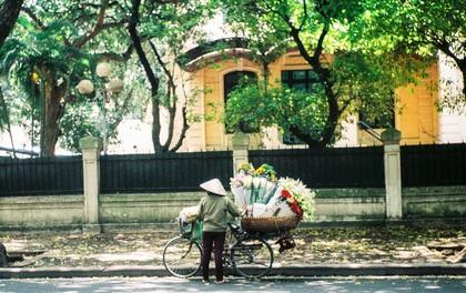Những ngày Hà Nội rất nóng, nhưng lòng dịu lại vì cảnh lá rụng đẹp như mùa thu thứ 2