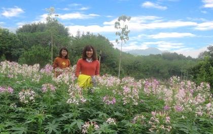 Rực nở sắc hoa chào đón lễ hội Cam Cao Phong lần thứ 3 tại Heritist Park