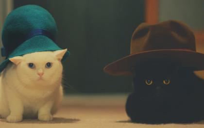 Phim ngắn cảm động về những chú mèo đáng yêu này sẽ khiến bạn mê tít!