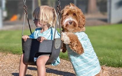 Một cậu bé mồ côi, một chú chó vô chủ và câu chuyện cảm động đằng sau đó