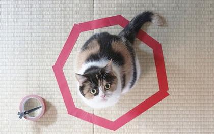 Giải mã bí ẩn: Vì sao lũ mèo rất thích ngồi trong vòng tròn?