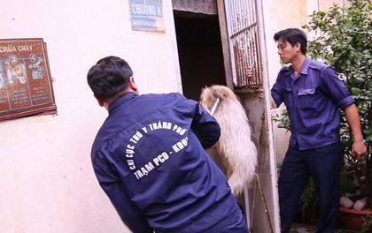 Clip cận cảnh quá trình chăm sóc tại điểm tập kết chó thả rông ở Sài Gòn trong lúc chờ chủ đến nhận
