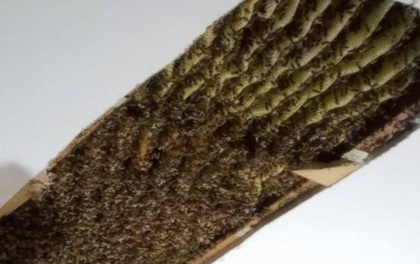 Người phụ nữ bàng hoàng phát hiện tổ ong hơn trăm nghìn con bám đầy trên trần nhà