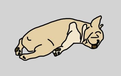 6 tư thế nằm ngủ tiết lộ những điều bí mật về cún cưng