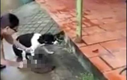 Phẫn nộ clip người phụ nữ thản nhiên chặt chân chú chó còn sống ngay trước hiên nhà