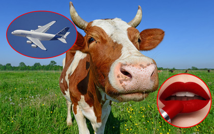 """Kinh ngạc tột độ với những sản phẩm bạn dùng hàng ngày """"made by bò"""""""
