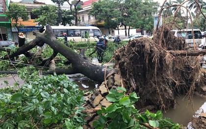 Chùm ảnh: Đường phố TP Vinh - Nghệ An tan hoang sau bão số 2