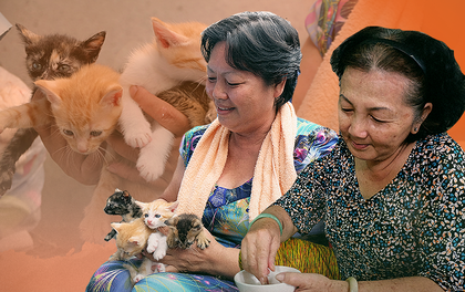 Chuyện cô giúp việc, dì bán vải chung sức cứu giúp hàng nghìn chú mèo suốt 17 năm ở Sài Gòn