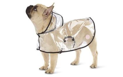 Trời mưa lạnh thế này, sắm ngay một chiếc áo mưa siêu cấp đáng yêu cho cún thôi nào