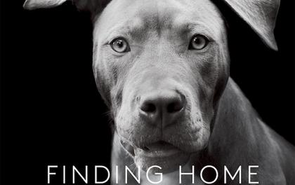 Bộ ảnh đầy cảm xúc về những chú chó lang thang của Traer Scott
