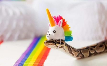 17 chú rắn mini đáng yêu khiến bạn thay đổi cái nhìn về loài này