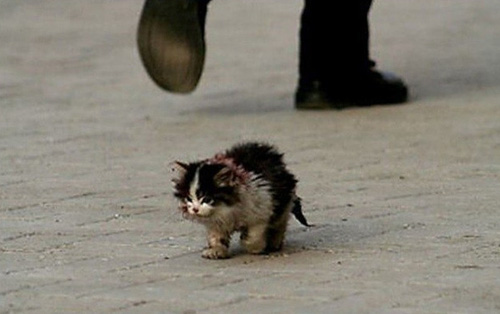 Bài học sâu sắc về lòng vị tha từ chú mèo hoang có tên Xấu Xí
