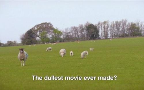Bộ phim thảm họa thế giới: Suốt 8 tiếng chỉ chiếu cảnh cừu đi lại trên bãi cỏ