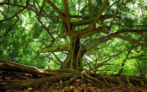 Câu chuyện xác người mất tích được tìm thấy nhờ... cái cây mọc ra từ dạ dày và sự thật đằng sau là gì?