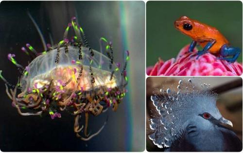 Đây là các loài động vật