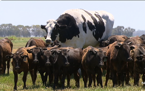 """Sự thật ít người biết đằng sau con bò """"The Rock"""" cao hơn mét 9 nặng gần tấn rưỡi đang gây bão cư dân mạng"""
