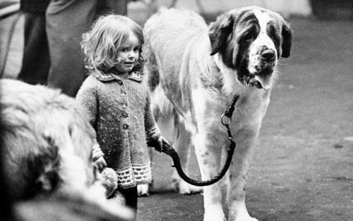 Những bức ảnh đen trắng hiếm có về Dog Show ở Anh giữa thế kỷ 20