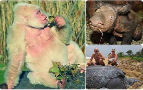 9 loài vật hiếm cực độ có khả năng tuyệt chủng trước cả khi bạn biết đến chúng