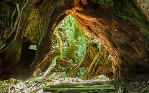 Mãn nhãn với khu rừng cổ tích đẹp lộng lẫy trên hòn đảo mưa không nghỉ ở Nhật Bản