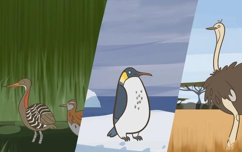 Tại sao trên đời lại có các loài là chim mà không biết bay?
