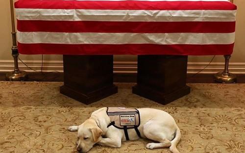 Hình ảnh chú chó buồn bã nằm canh trước linh cữu cố tổng thống George H.W Bush đến giây phút cuối cùng gây bão MXH