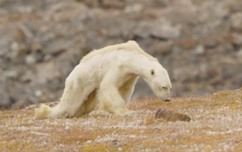 60% cây trồng và 50% động vật hoang dã có thể bị biến mất trên toàn cầu chỉ vì điều này