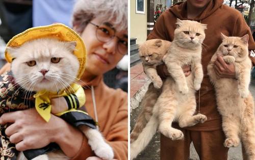 Lộ diện đàn con của chú mèo tên