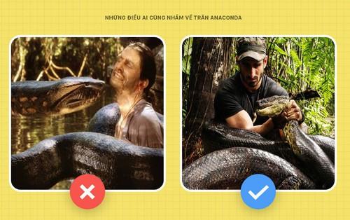 Chào các ông! Tôi là trăn Anaconda và đây toàn là những sự thật các ông vẫn đang hiểu lầm về tôi