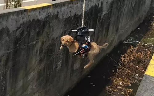 Thấy cún con 2 ngày chờ chết dưới cống bẩn, kỹ sư Ấn Độ chế luôn robot gắp thú để giải cứu