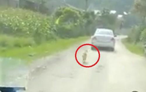 Clip: Sen đi lấy chồng, boss đuổi theo xe đưa dâu cả một đoạn dài cho đến khi khuất bóng