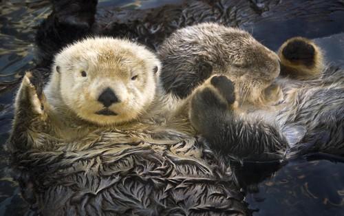 6 sự thật chứng minh thế giới động vật sẽ không khi nào khiến chúng ta thôi ngạc nhiên