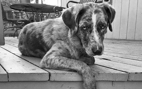 Thời khắc cuối cùng của thú cưng và những điều mọi chủ nuôi cần biết theo chia sẻ của các bác sĩ thú y