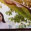 """""""Thánh cover"""" Hương Ly tung MV đầu tay: Nghe 1 lần thuộc luôn, liệu có công phá """"top trending"""" như thường?"""