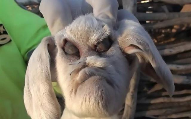 Con dê mới chào đời mang gương mặt quỷ khiến nhiều người giật bắn mình