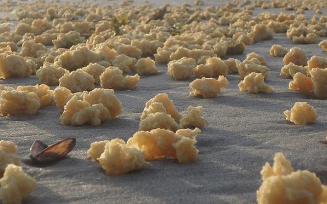 Pháp: Phát hiện thấy hàng nghìn vật thể lạ giống xốp nằm rải rác khắp bờ biển