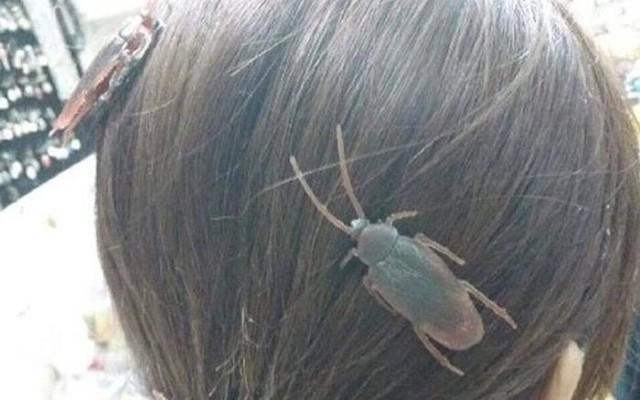 Trông như gián đậu lên đầu? Không! Đây là loạt cặp tóc siêu xinh dành cho bạn gái cá tính yêu động vật