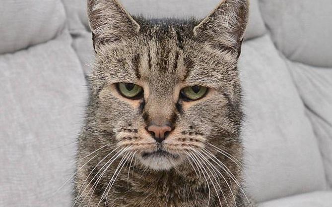 """Sống 32 năm trên đời, """"cụ"""" mèo già tương đương 144 tuổi ở con người"""