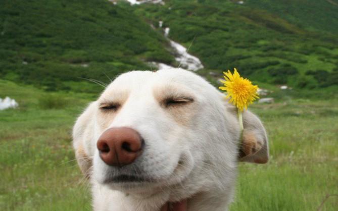 Hút cả trăm nghìn like trên mạng xã hội nhờ những bức ảnh siêu deep của thú cưng