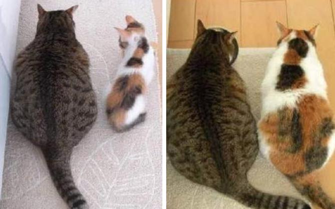 Minh chứng cho thấy béo hoàn toàn có thể lây qua đường tình bạn chỉ trong 2 tấm ảnh