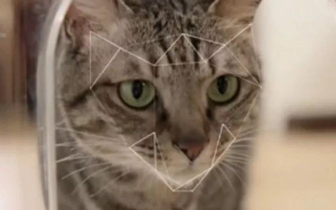 Camera nhận diện mặt mèo, giúp nó nhắn tin cho ông chủ mỗi khi muốn vào nhà