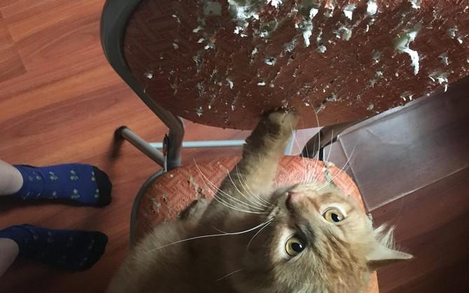 Nỗi lòng cô gái nuôi phải 4 con boss mèo chẳng biết làm gì ngoài ăn và cào nát tất cả đồ vật trong nhà